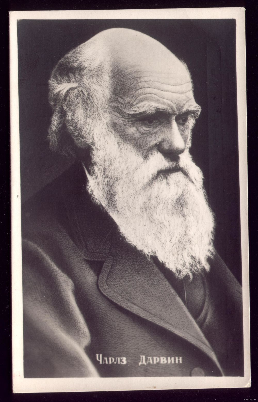 On the origin of species, Charles Darwin - m Charles darwin evolution pictures