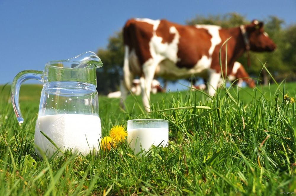 Загрузить Курсовая по экономики отрасли животноводства Популярные запросы картинок